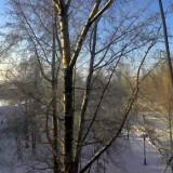 Тополь. Зима